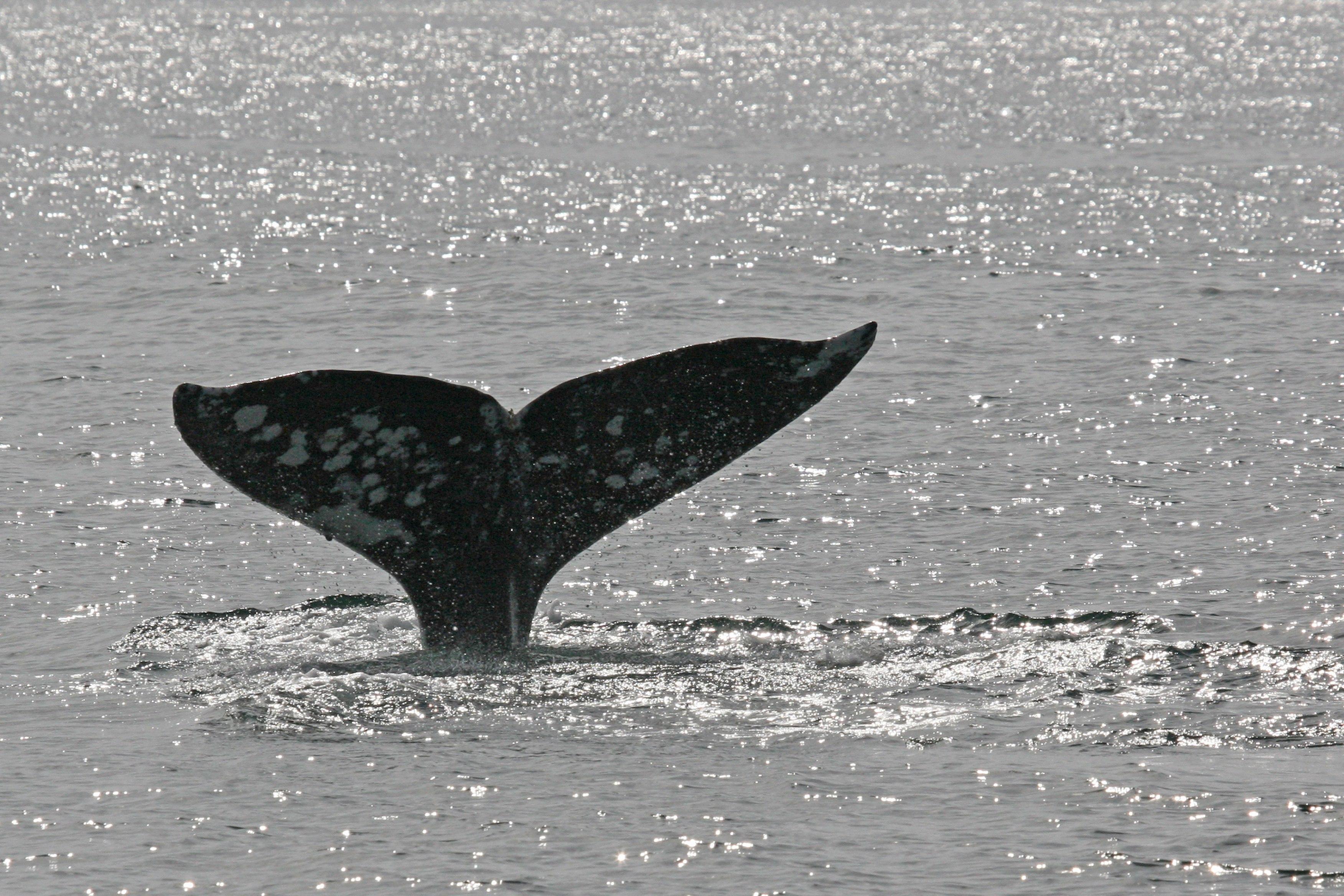 whale tail san diego