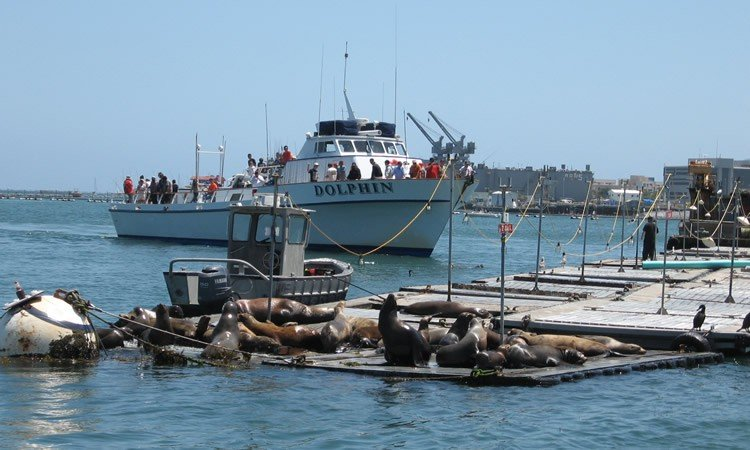 fishing boat getting back from the bait barge. Sea lions awaiting lunch